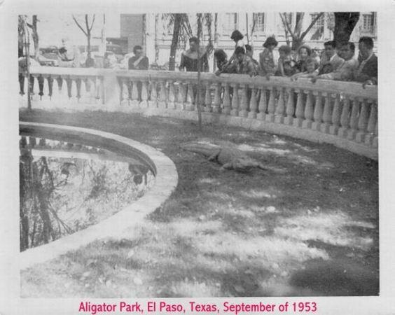 1953-10-15-08-Alagator park